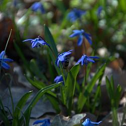 Wielki Błękit ogród opactwa w marcu i kwietniu – FOT. br. Robert OSB