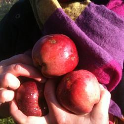 Módl się, pracuj i nie trap się – jesień w Lubiniu